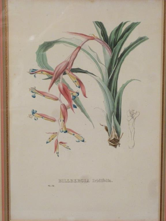 Pair Hand Colored Botanical Prints - 2