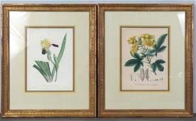 Pair Hand Colored Botanical Prints