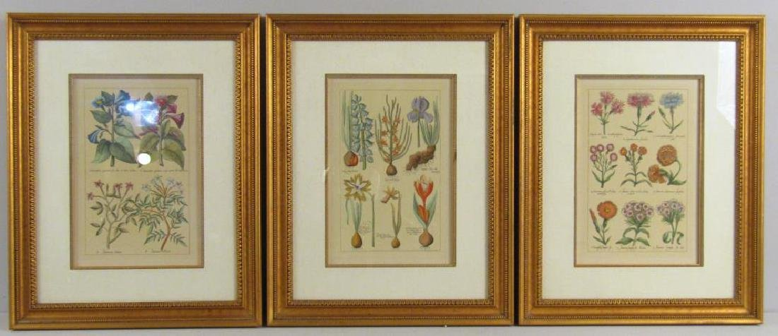 3 Hand Colored Botanical Prints