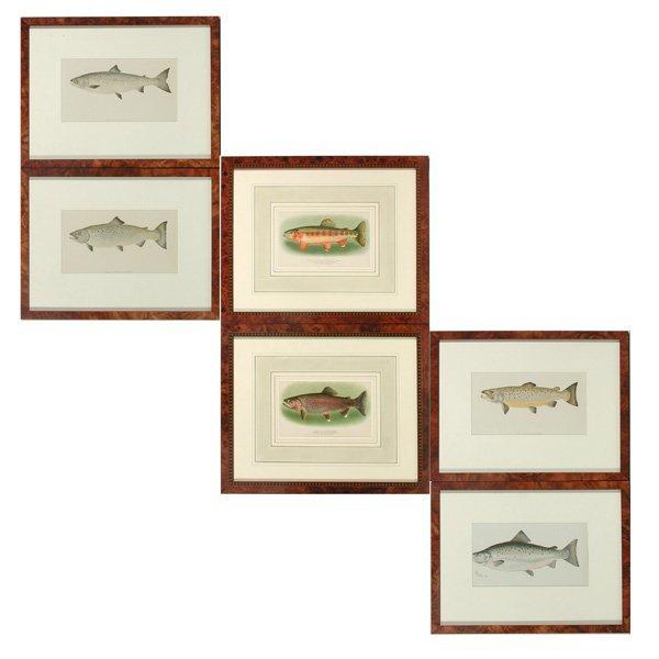 19: Group of Six Fish Prints