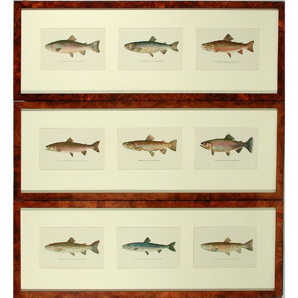 20: Group of Nine Fish Prints in Three Frames
