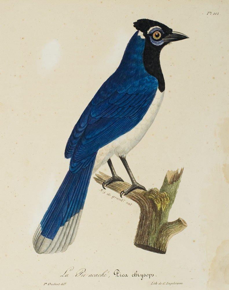 1: Paul Louis Oudart 1796-1850 12 Illustrations pour La