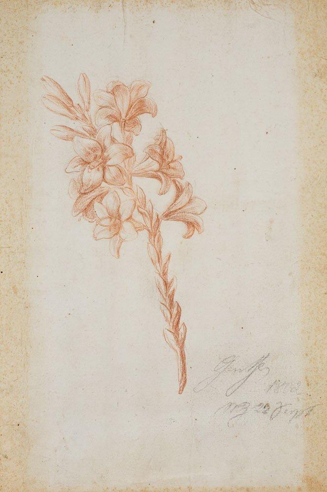 2: Johann Wolfgang von Goethe 1749-1832 Les lys , 1802