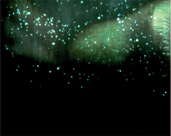 5: Doug Aitken