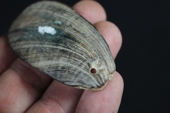 Shell Pendant - California - 5
