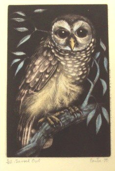 The Barred Owl Original Signed and Numbered Color Etchi