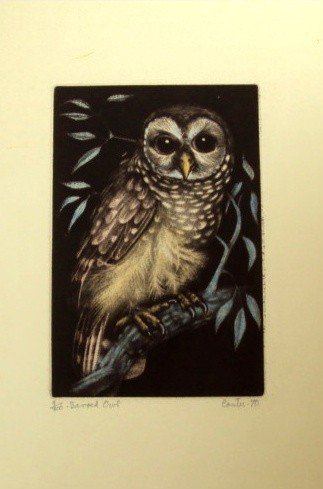 1146: The Barred Owl Original Signed and Numbered Color