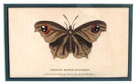 Antique Butterfly Moth Color Etching Dated 1799 Framed