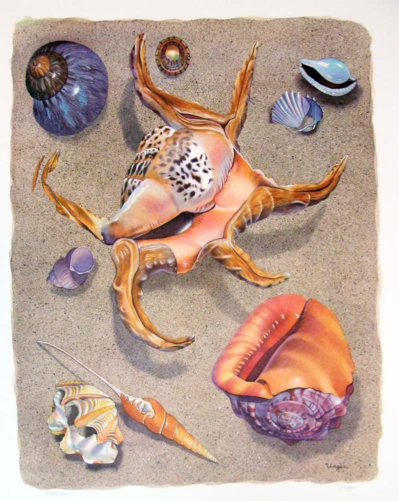 """Spider Conch by Unger 1982 Color Lithograph 25"""" by 19"""""""