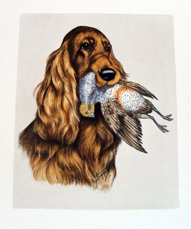 Retriever w Bird hand Colored Large Engraving by Reggis