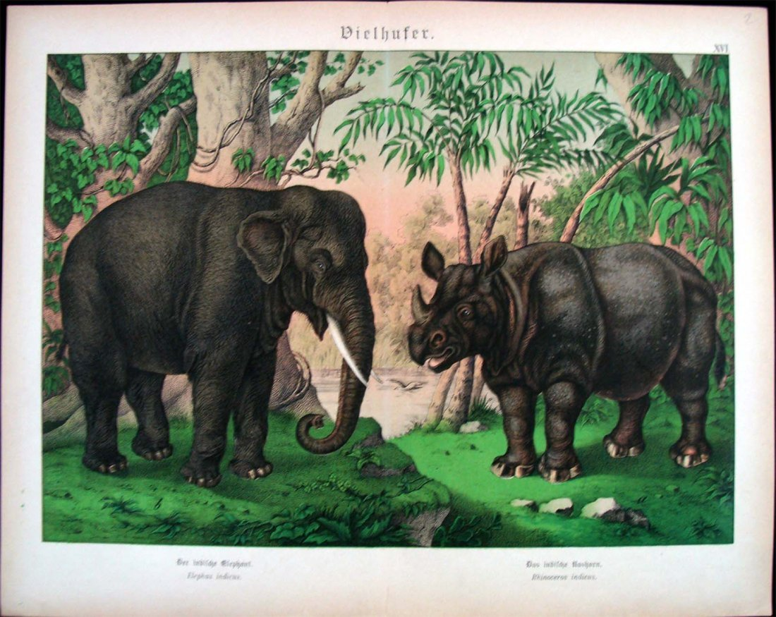 German Natural History 1880 Study Of Elephant & Rhino