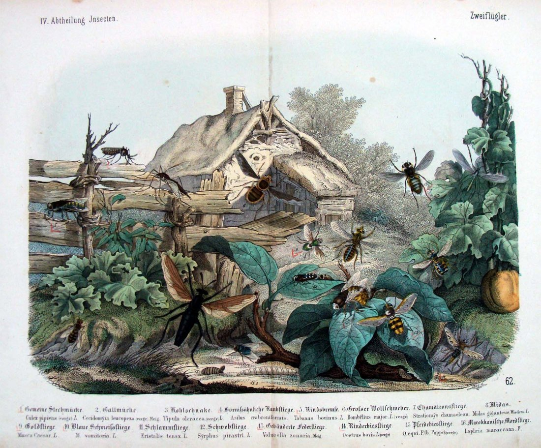 Natural History 1860 German Insects Study Hand Colored