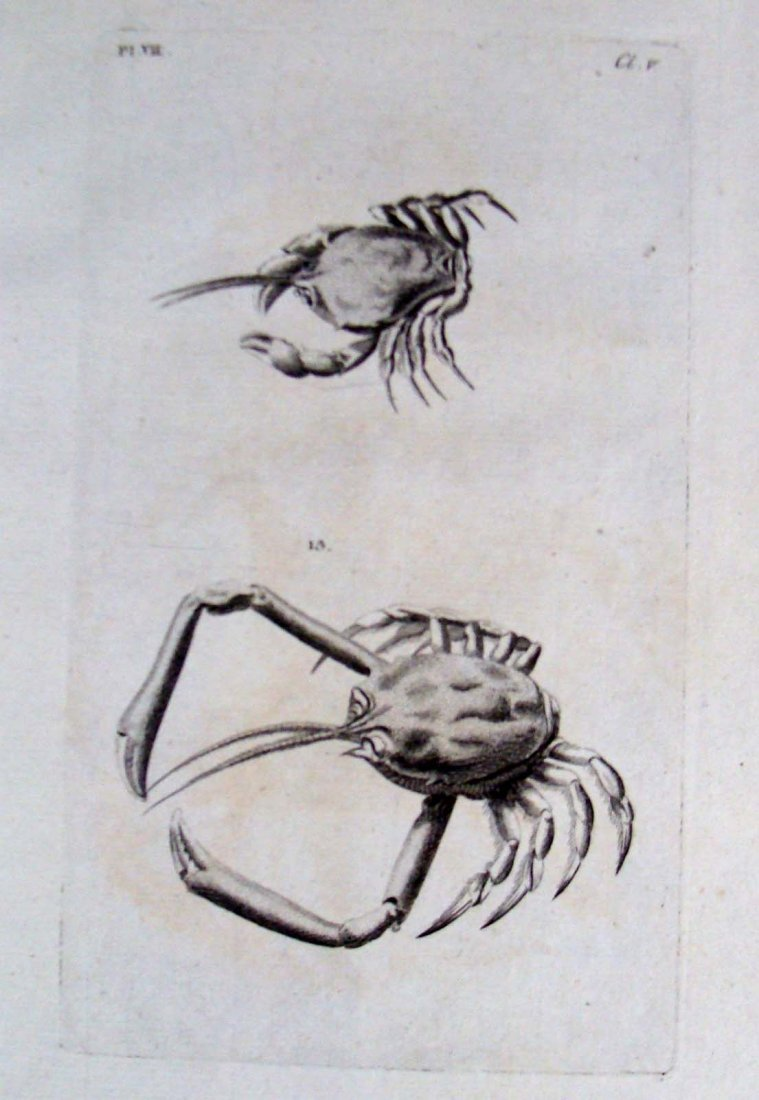 British Zoology 1777: Lobster & Crabs, Copper Plate Etc