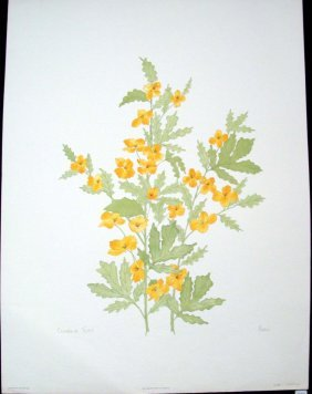 Celandine Poppy By Moran Signed & Numbered #609/750