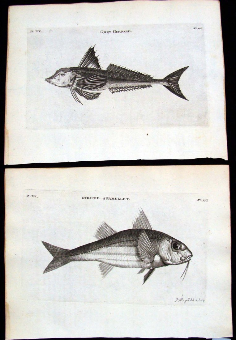 British Zoology 1777 Copper Plate Etchings Lot 2 Fish