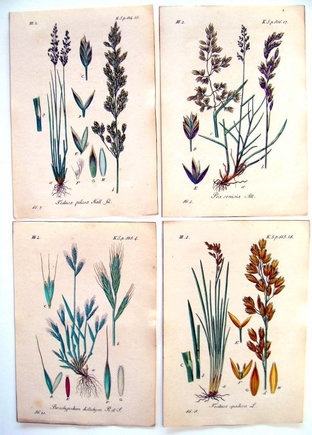 Lot of 4 Hand Colored Botanical Engravings from 1790