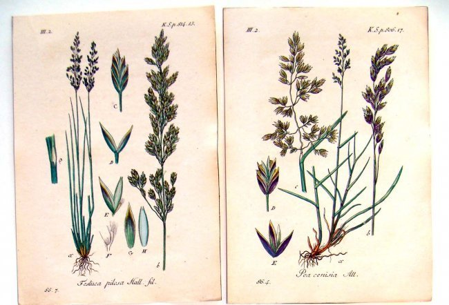 Lot of 4 Hand Colored Botanical Engravings from 1790 - 2