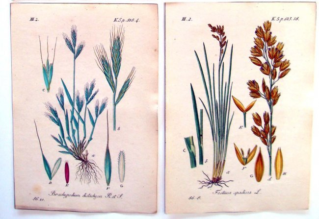 Lot of 4 Hand Colored Botanical Engravings from 1790 - 3