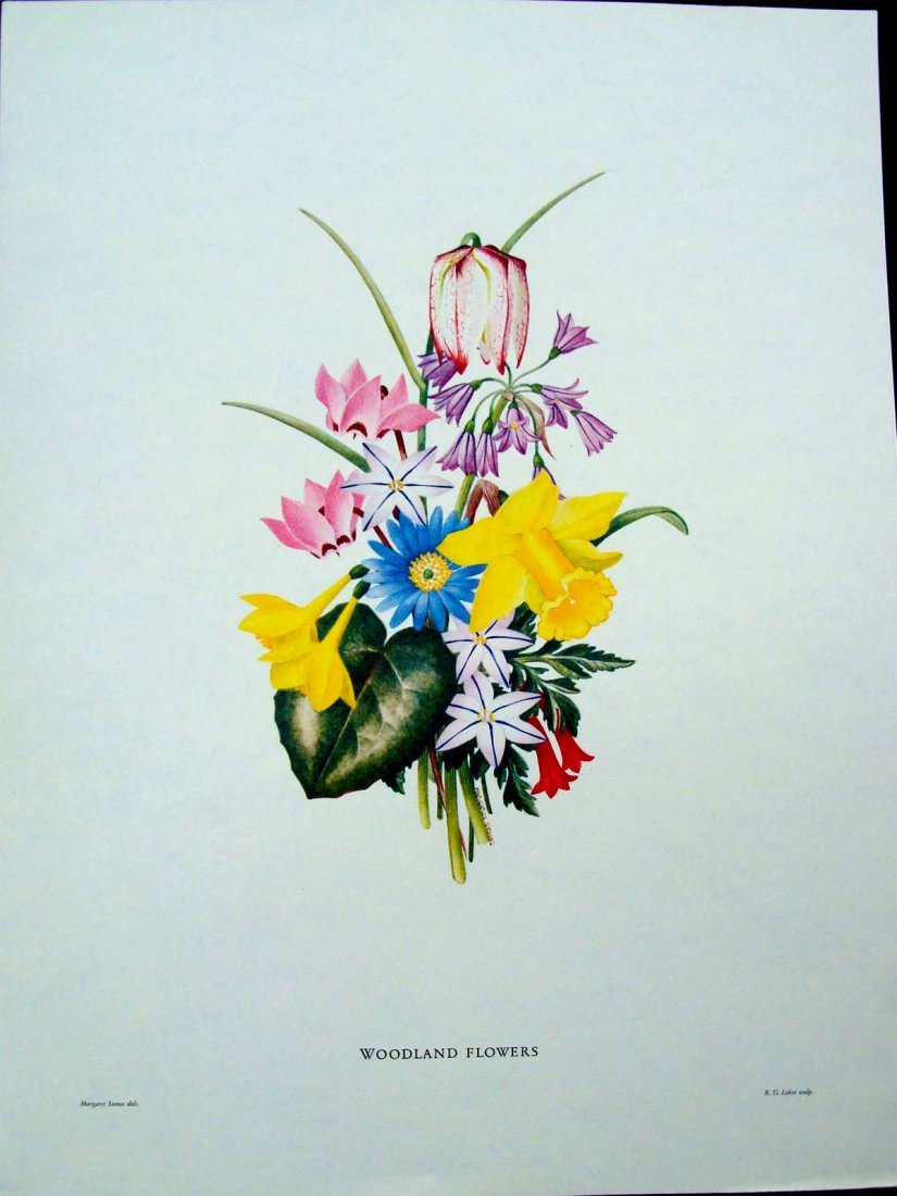 Woodland Flowers by Margaret Stones Lithograph 1970