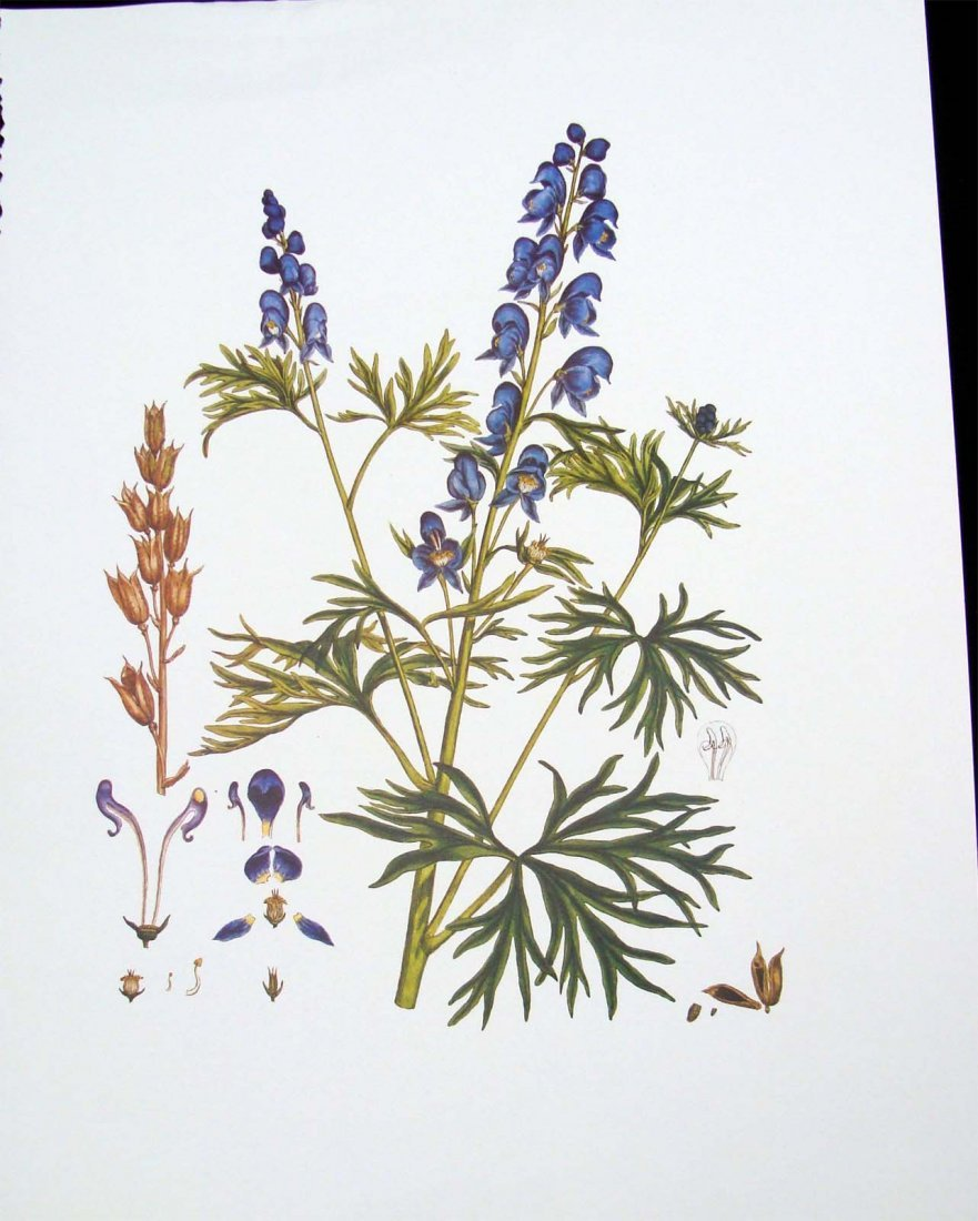 1960's Color Floral Lithograph Unsigned