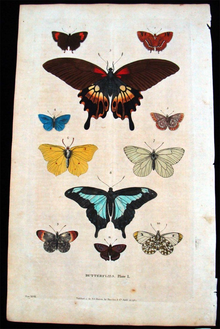 Handcolored Copper Plate Etching Butterflies Study 1787