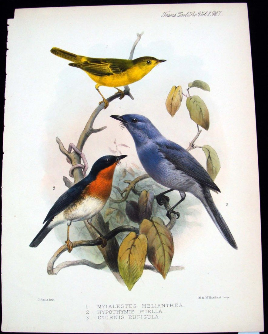 Hand Colored Lithographs Zoological Bird Study 1875