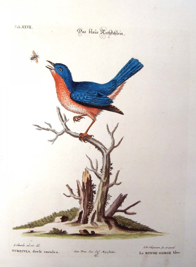 Edwards Seligmann Le Grand-Martin ou Hirondelle 1770