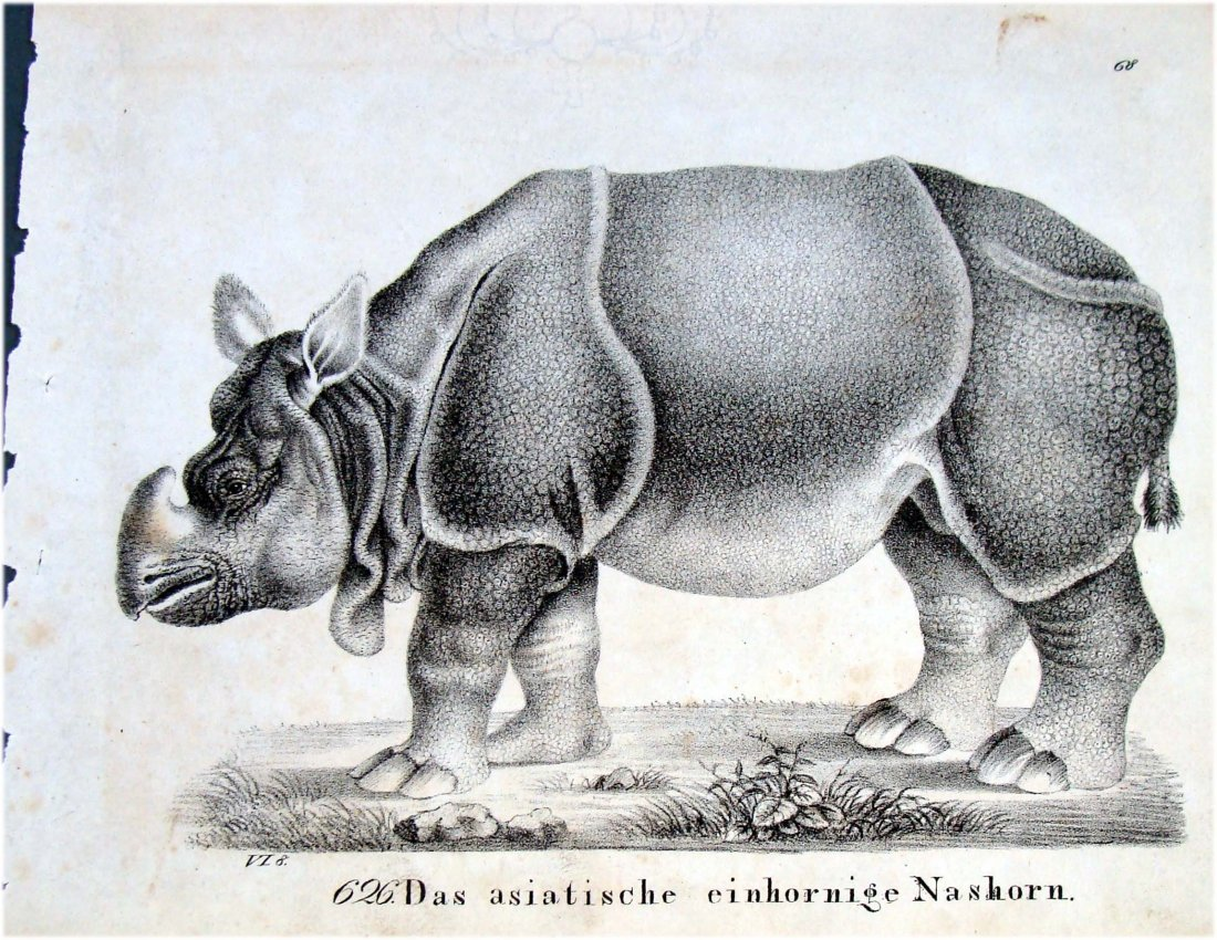 1830 Lithograph by Richter Rhinoceros
