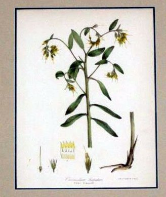 Wildflower of Great Britain Botanic Framed Print 1871