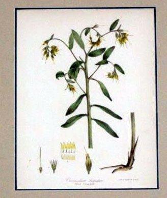Wildflower of Great Britain Botanic Framed Print 1871
