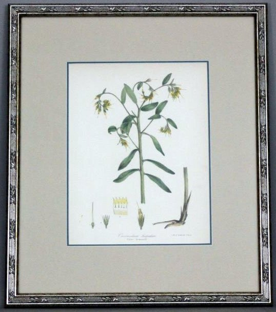 Wildflower of Great Britain Botanic Framed Print 1871 - 2