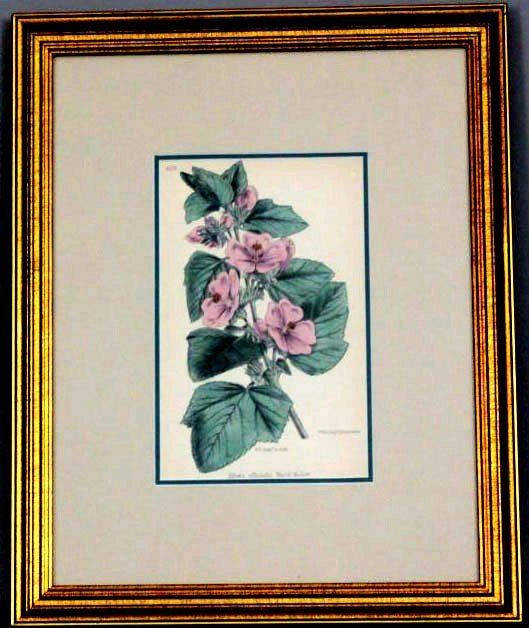 Wildflower of Great Britain Botanical 1871 W G Smith - 2