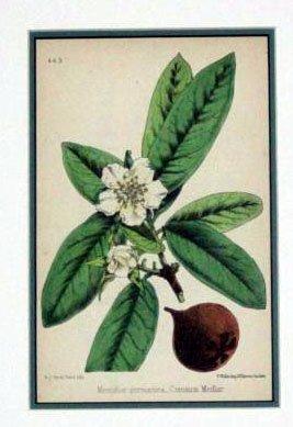Wildflower of Great Britain Botanical 1871 W G Smith