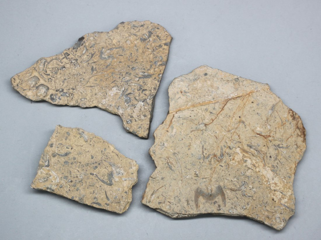 Ancient Chinese stone Fossils Set of Three