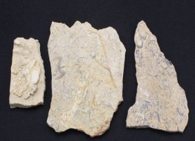 Chinese Ancient stone Fossils Set of Three