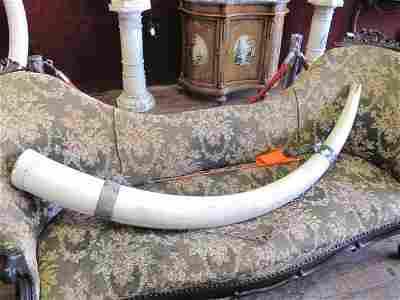 9: ELEPHANT TUSK