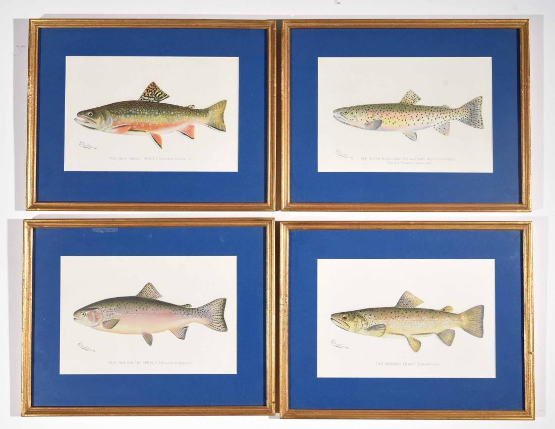 (4) DENTON FISH COLOR PRINTS