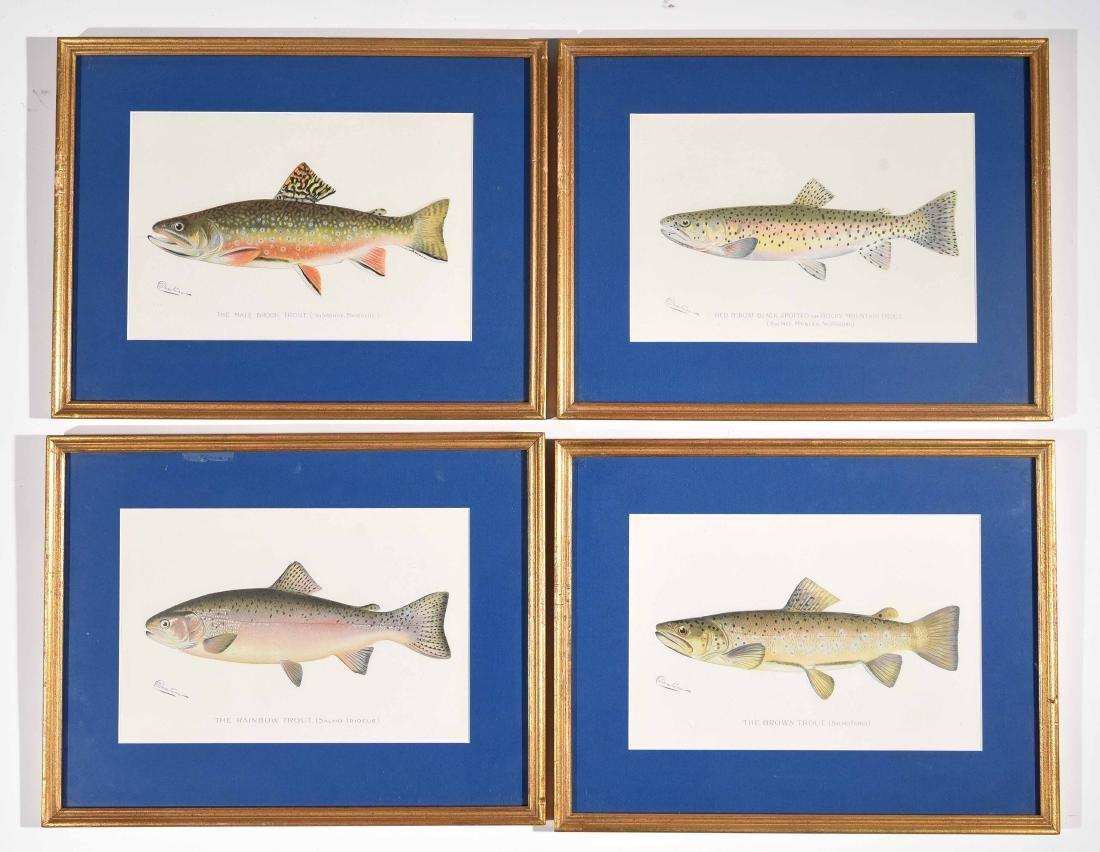 (4) DENTON FISH COLOR PRINTS