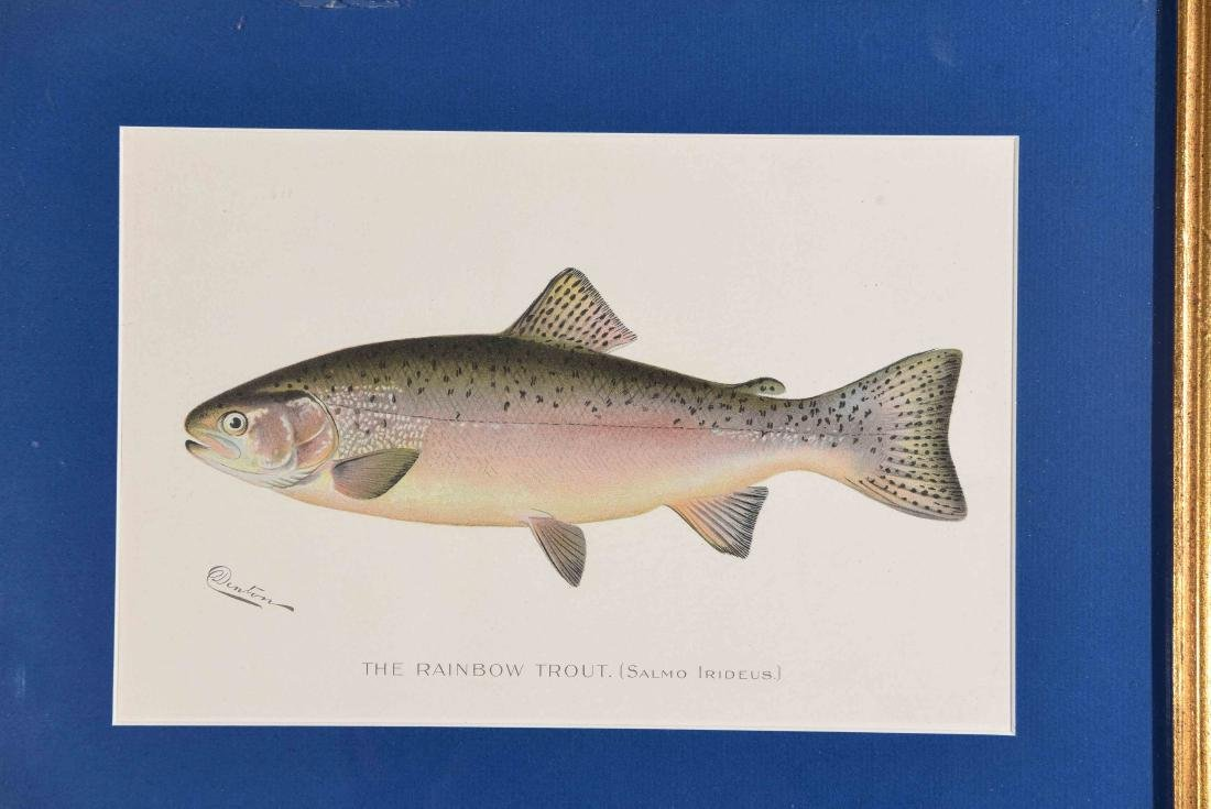 (4) DENTON FISH COLOR PRINTS - 2