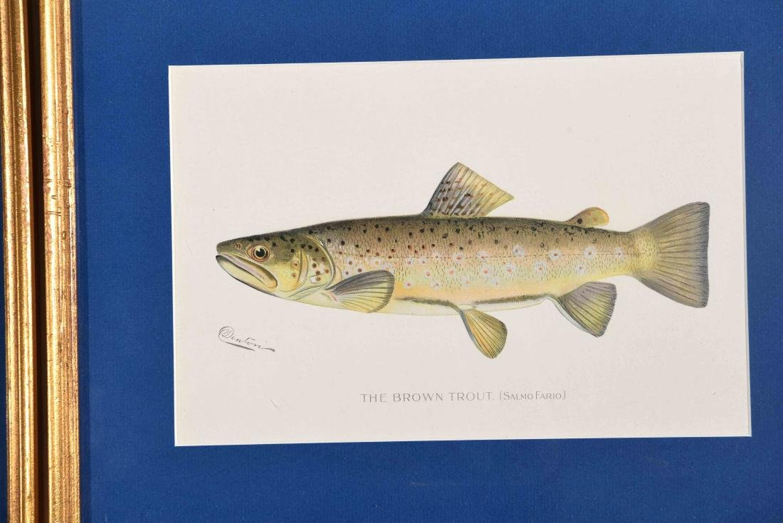 (4) DENTON FISH COLOR PRINTS - 3