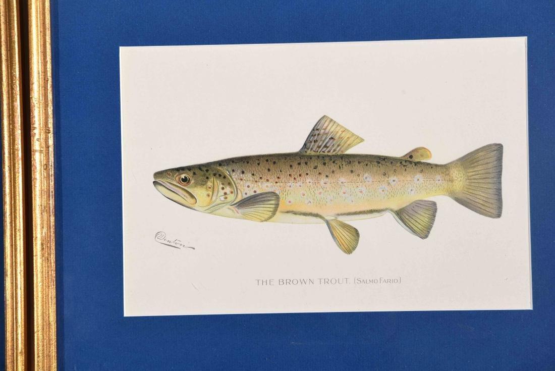 (4) DENTON FISH COLOR PRINTS - 3