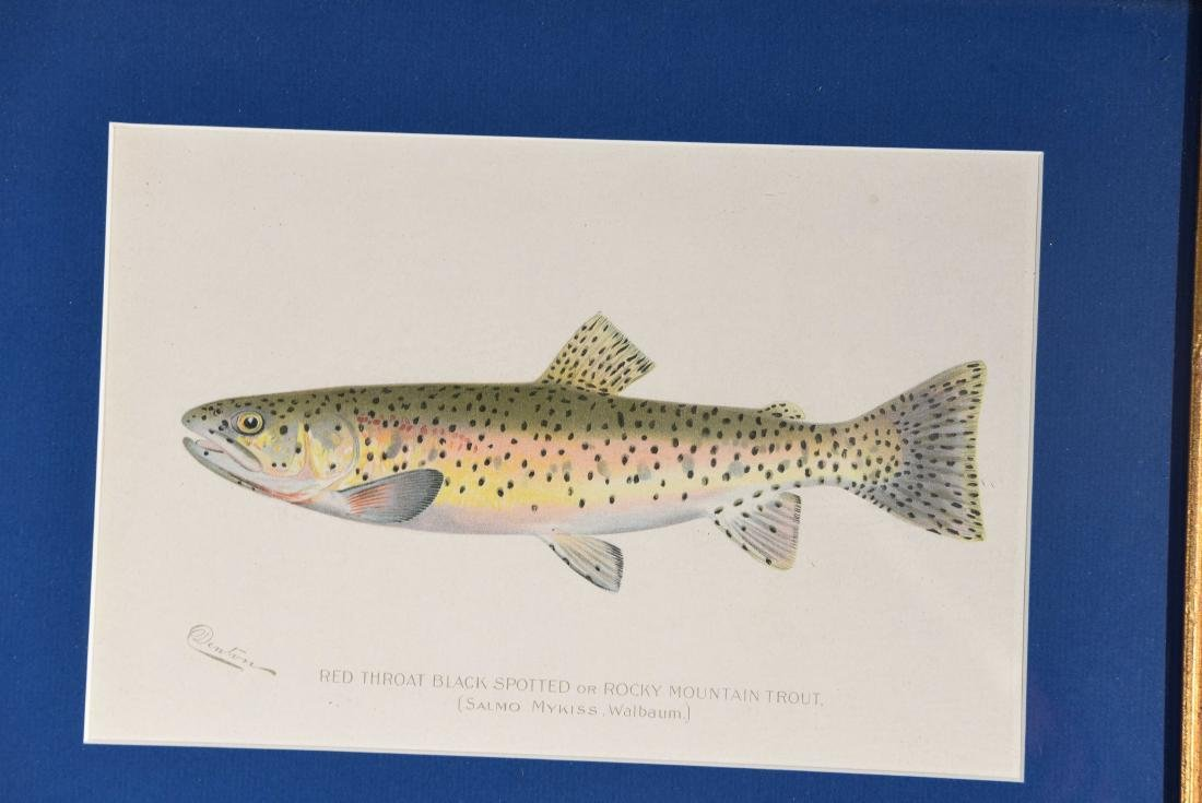 (4) DENTON FISH COLOR PRINTS - 4