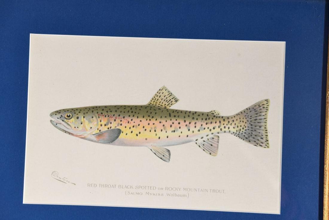 (4) DENTON FISH COLOR PRINTS - 4