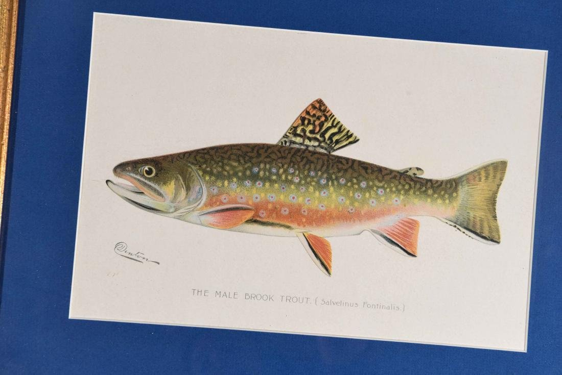 (4) DENTON FISH COLOR PRINTS - 5