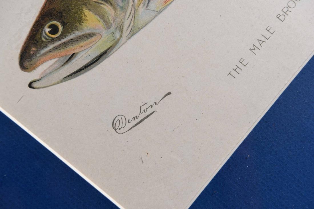 (4) DENTON FISH COLOR PRINTS - 6