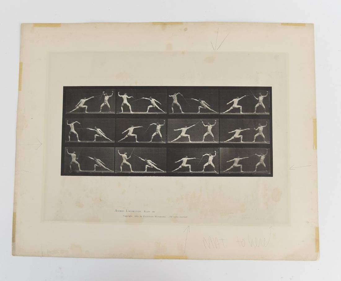 EADWEARD MUYBRIDGE, ANIMAL LOCOMOTION, PLATE 349