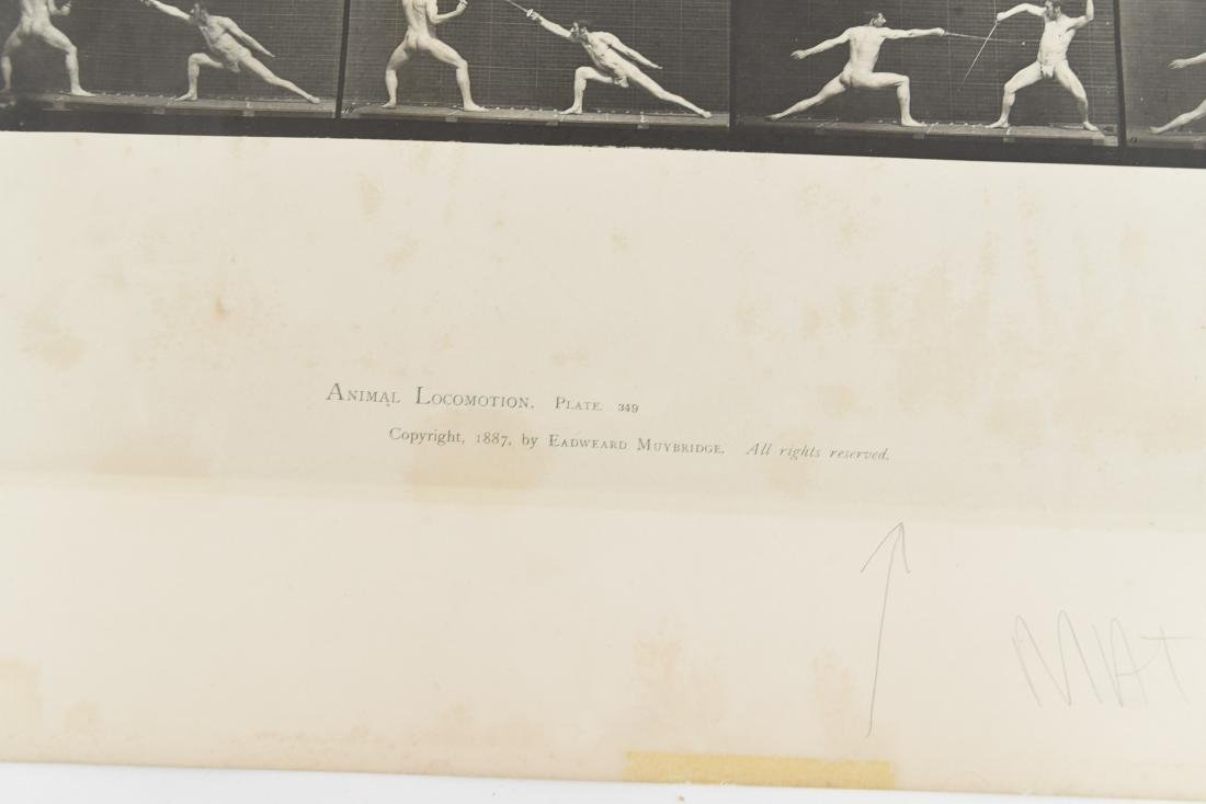 EADWEARD MUYBRIDGE, ANIMAL LOCOMOTION, PLATE 349 - 2