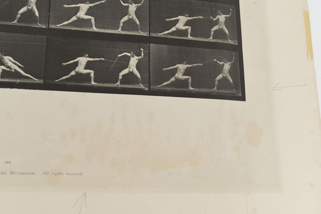 EADWEARD MUYBRIDGE, ANIMAL LOCOMOTION, PLATE 349 - 3