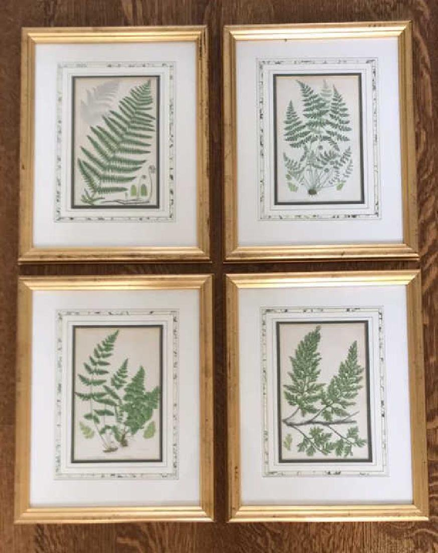 BOTANICAL FERN PRINT GROUPING