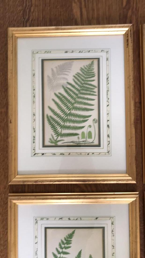 BOTANICAL FERN PRINT GROUPING - 2